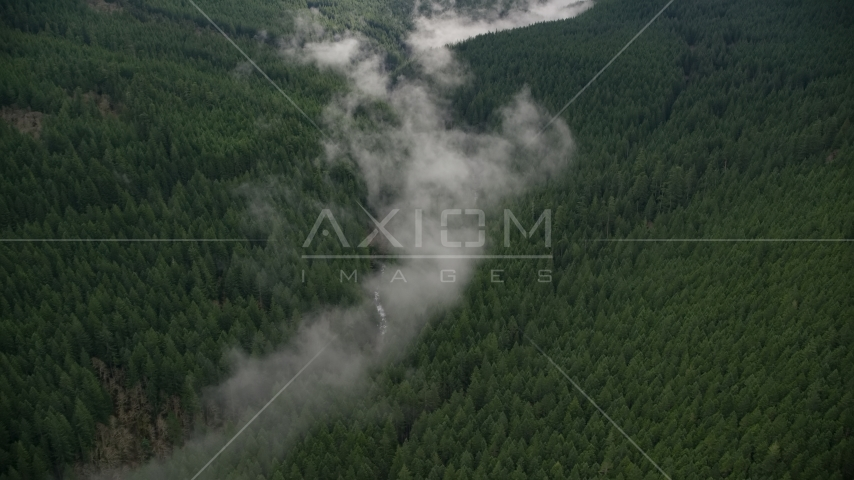Bird's eye view of mist over a creek, and evergreen forest in the Cascade Range, Hood River County, Oregon Aerial Stock Photos | AX154_053.0000311F