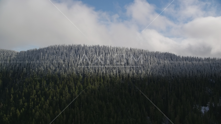 Snow line and snowy evergreen trees atop a mountain ridge, Cascade Range, Hood River County, Oregon Aerial Stock Photos | AX154_058.0000291F