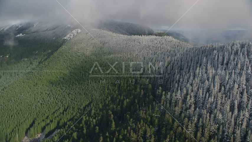 Snow line on evergreen trees atop a mountain ridge, Cascade Range, Hood River County, Oregon Aerial Stock Photos | AX154_059.0000074F