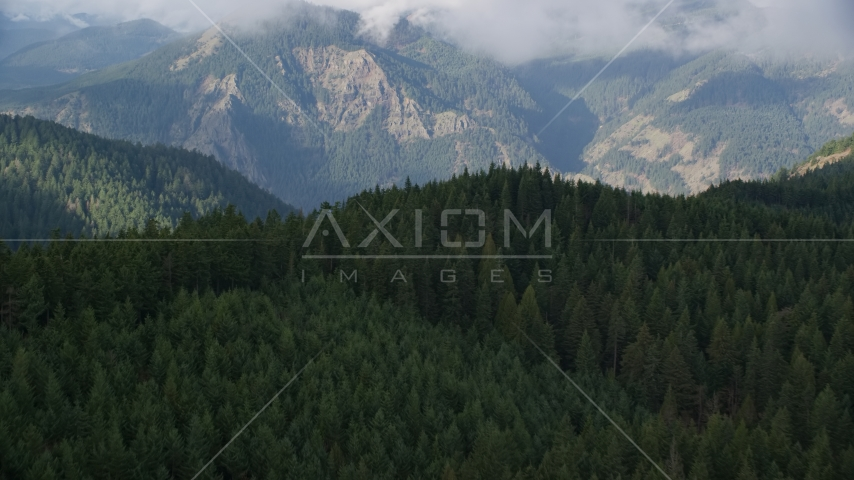 Evergreen forest and distant mountains, Hood River, Oregon Aerial Stock Photo AX154_151.0000272F | Axiom Images