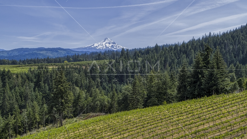 Snowy Mount Hood seen from hillside Phelps Creek Vineyards in Hood River, Oregon Aerial Stock Photos | DXP001_009_0003