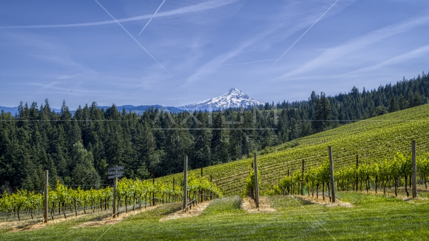 Rows of grapevines with a view of Mount Hood, Hood River, Oregon Aerial Stock Photos | DXP001_009_0007