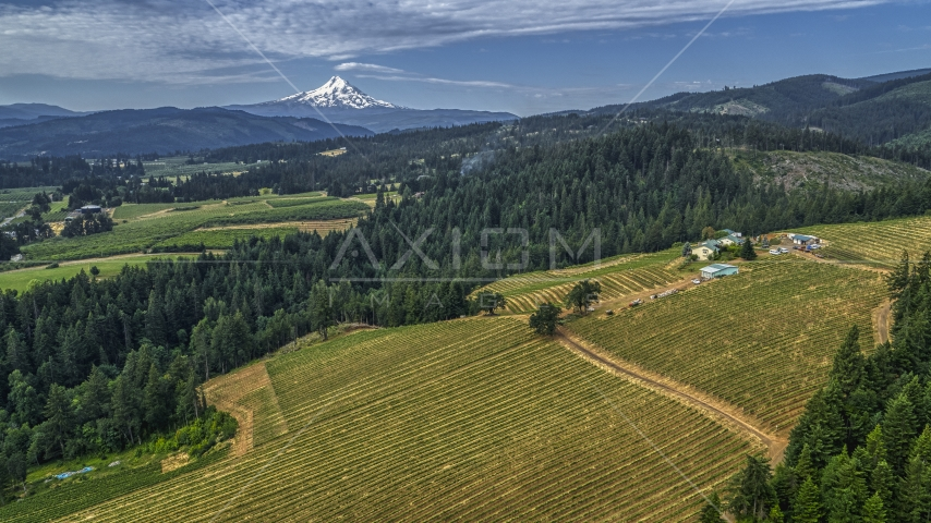 Rows of grapevines at a hillside vineyard in Hood River, Oregon, and Mt Hood in the distance Aerial Stock Photo DXP001_015_0003 | Axiom Images