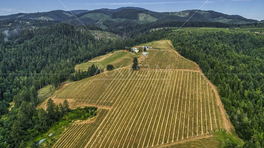 Rows of grapevines on a hillside at a vineyard in Hood River, Oregon Aerial Stock Photos   DXP001_015_0004