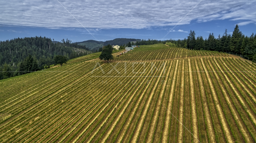 Rows of grapevines at a vineyard in Hood River, Oregon Aerial Stock Photos | DXP001_015_0005