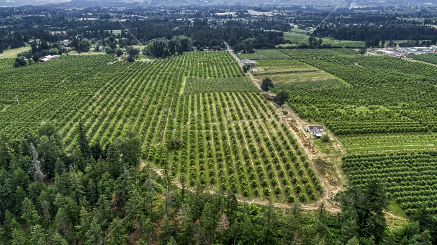 Rows of trees at an orchard in Hood River, Oregon Aerial Stock Photos | DXP001_015_0007