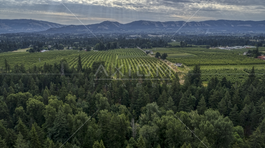 An orchard beyond evergreen trees in Hood River, Oregon Aerial Stock Photos | DXP001_015_0008