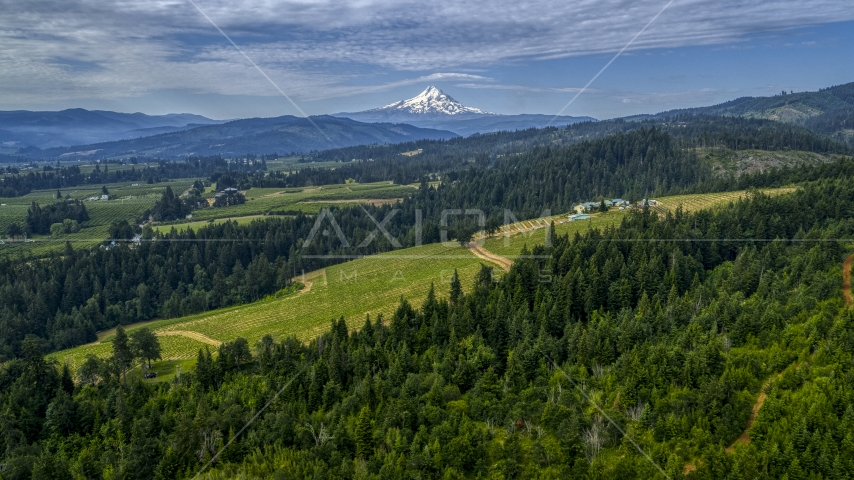 Mt Hood seen from from a hillside vineyard in Hood River, Oregon Aerial Stock Photos | DXP001_015_0011