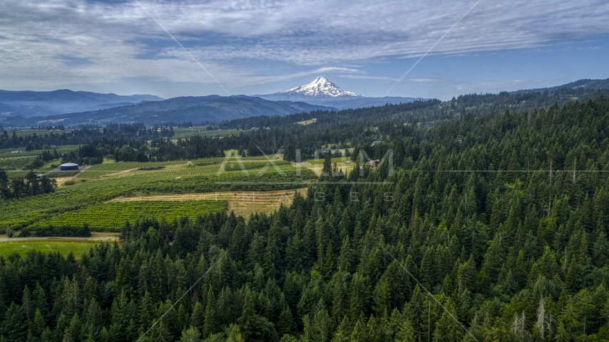 Mt Hood seen from orchards and evergreen forest in Hood River, Oregon Aerial Stock Photos | DXP001_015_0012