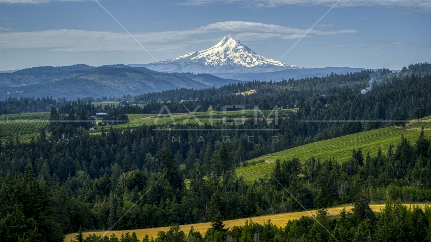 Mt Hood seen from orchards and evergreen trees in Hood River, Oregon Aerial Stock Photos DXP001_015_0013