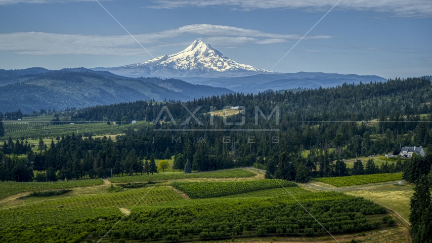 Orchards and evergreen trees with Mt Hood in the distance in Hood River, Oregon Aerial Stock Photos | DXP001_015_0014
