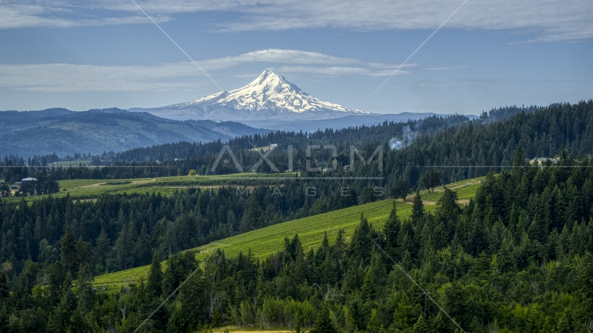 Orchards, evergreen trees, and snowy Mt Hood in the distance in Hood River, Oregon Aerial Stock Photos | DXP001_015_0016