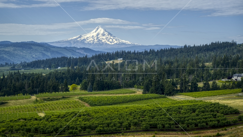 Orchard trees, evergreens, and snowy Mt Hood in the distance in Hood River, Oregon Aerial Stock Photos | DXP001_015_0017