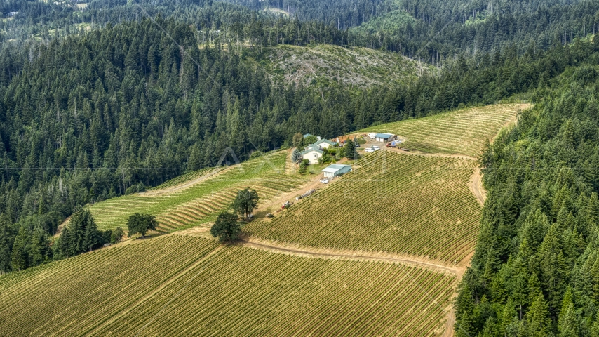 The Phelps Creek Vineyards on a hilltop covered with grapevine rows in Hood River, Oregon Aerial Stock Photos | DXP001_016_0003