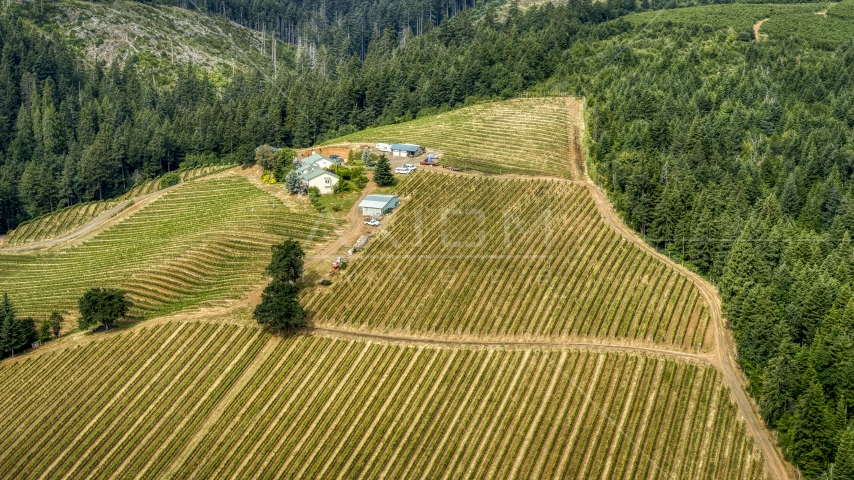 A hilltop covered with rows of grapevines surrounding buildings at Phelps Creek Vineyards in Hood River, Oregon Aerial Stock Photos | DXP001_016_0007