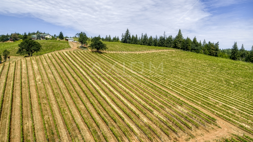 Neat rows of grapevines on a hill at the Phelps Creek Vineyards, Hood River, Oregon Aerial Stock Photos | DXP001_016_0014