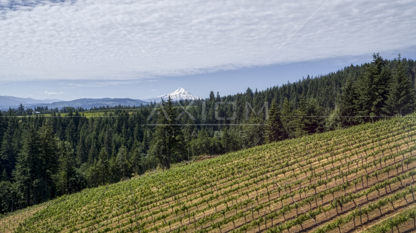 A vineyard on a hillside with view of Mt Hood, Hood River, Oregon Aerial Stock Photos | DXP001_017_0002