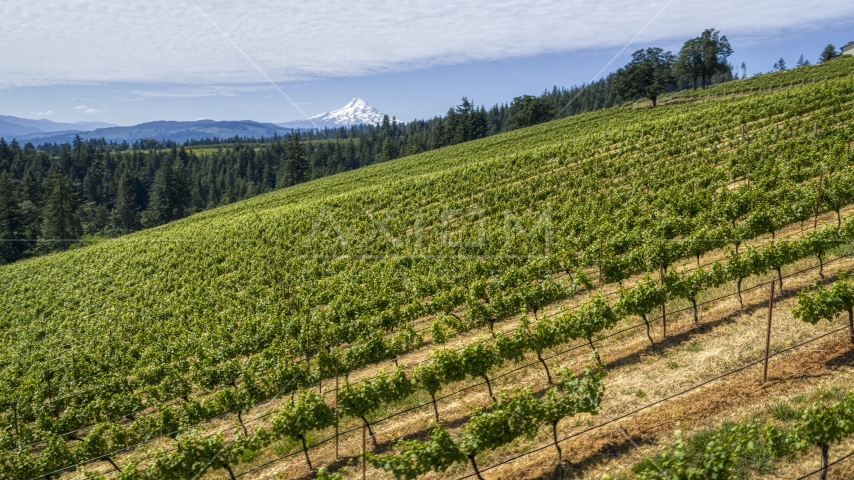 A hillside with rows of grapevines and a view of Mt Hood, Hood River, Oregon Aerial Stock Photos | DXP001_017_0006