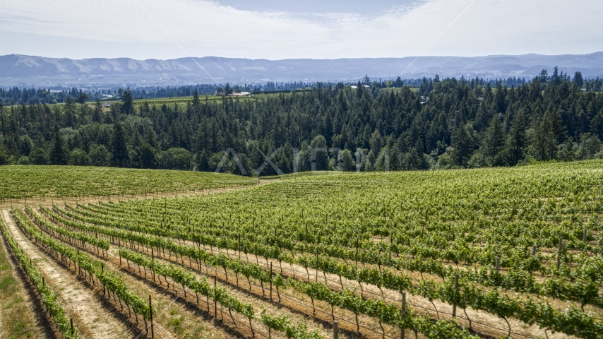 Neat rows of grapevines on a hillside in Hood River, Oregon Aerial Stock Photos | DXP001_017_0007