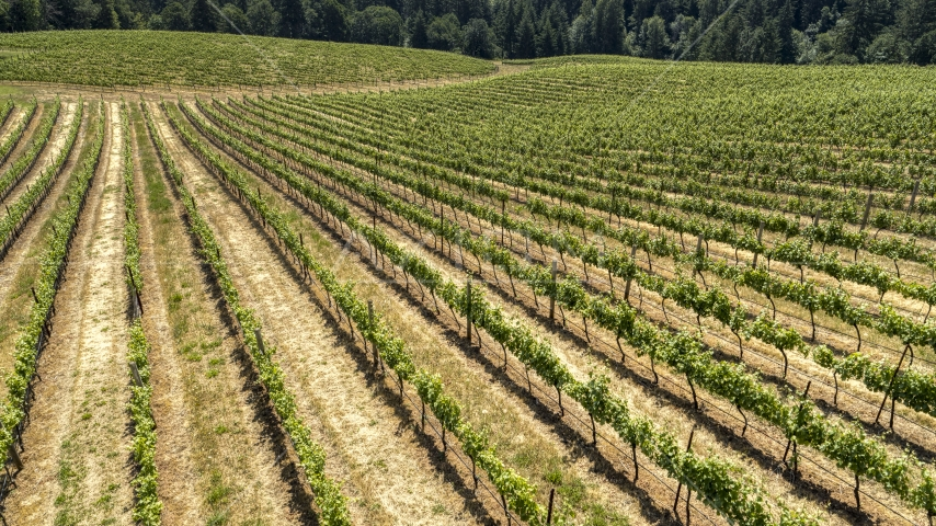 Long rows of grapevines on a hillside in Hood River, Oregon Aerial Stock Photos | DXP001_017_0008