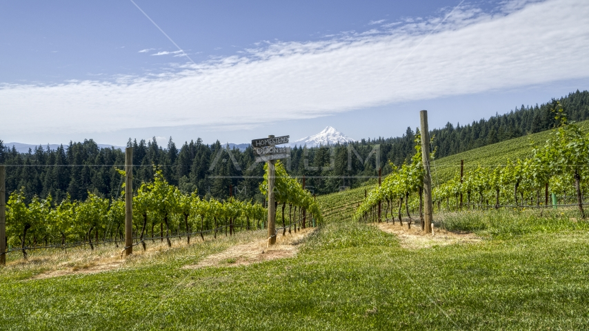 Rows of grapevines and a sign with a view of Mt Hood, Hood River, Oregon Aerial Stock Photos | DXP001_017_0011