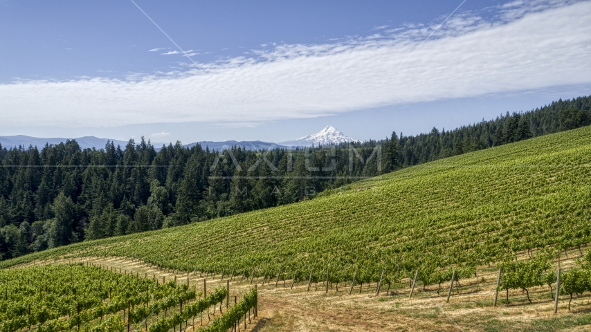 Grapevines at Phelps Creek Vineyards and snowy Mount Hood in Hood River, Oregon Aerial Stock Photos | DXP001_017_0013