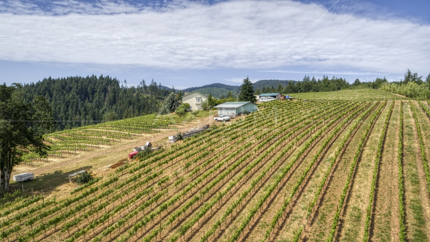 Neat rows of grapevines at a hillside vineyard in Hood River, Oregon Aerial Stock Photos | DXP001_017_0014