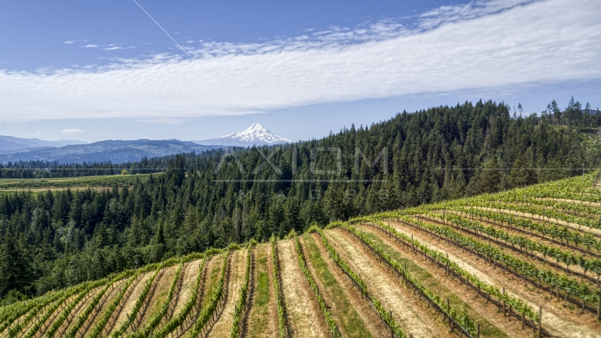Mount Hood seen from hillside Phelps Creek Vineyards in Hood River, Oregon Aerial Stock Photos | DXP001_017_0015