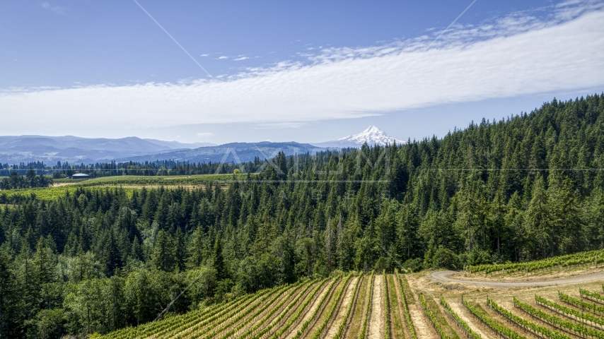 Rows of grapevines near forest and Mt Hood in the background, Hood River, Oregon Aerial Stock Photos | DXP001_017_0016