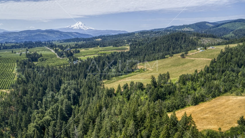 The Phelps Creek Vineyards with Mount Hood in the background, Hood River, Oregon Aerial Stock Photos | DXP001_017_0020