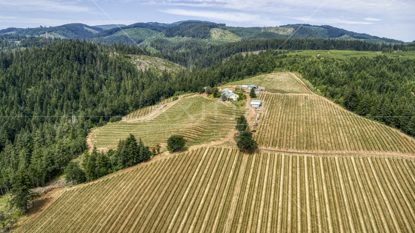 A wide view of hilltop buildings and grapevines at Phelps Creek Vineyards in Hood River, Oregon Aerial Stock Photos | DXP001_017_0025