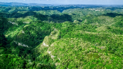 AX101_049.0000000F - Aerial stock photo of Tree covered mountains and jungle, Karst Forest, Puerto Rico