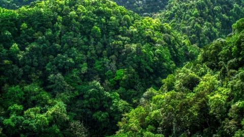 AX101_055.0000000F - Aerial stock photo of A view of the lush jungle and mountains in the Karst Forest, Puerto Rico