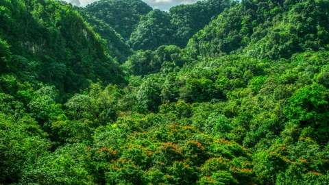 AX101_056.0000223F - Aerial stock photo of Dense jungle, Karst Forest, Puerto Rico