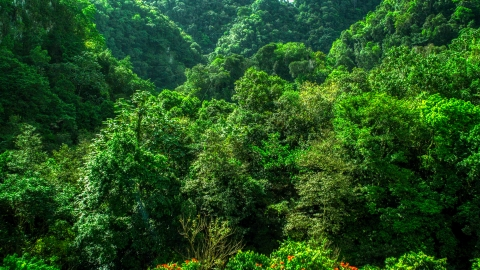 AX101_057.0000247F - Aerial stock photo of Dense jungle in the Karst Forest, Puerto Rico