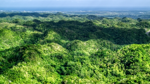 AX101_075.0000197F - Aerial stock photo of Lush green trees of the jungle, Karst Forest, Puerto Rico