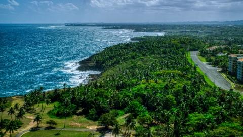 AX101_210.0000258F - Aerial stock photo of Palm trees and a road along the Caribbean island coast in Vega Alta, Puerto Rico