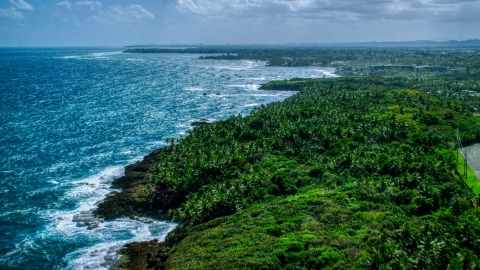 AX101_211.0000000F - Aerial stock photo of Palm tree covered coast and blue water, Vega Alta, Puerto Rico