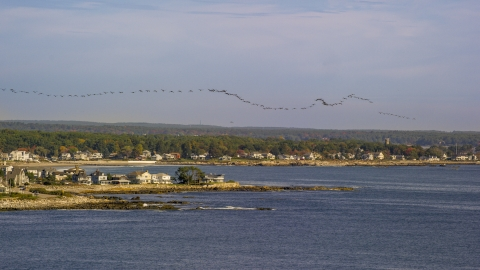 AX147_163.0000150 - Aerial stock photo of A flock of birds above a coastal town, autumn, Rye, New Hampshire