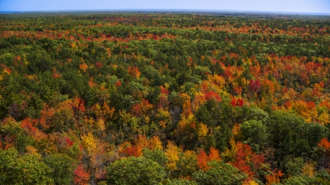 AX147_283.0000075 - Aerial stock photo of A colorful autumn forest in Biddeford, Maine