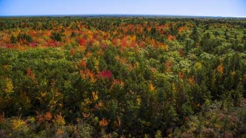 AX147_285.0000017 - Aerial stock photo of Colorful autumn trees in a forest, Biddeford, Maine