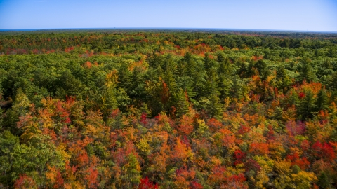 AX147_287.0000088 - Aerial stock photo of A forest with colorful fall leaves on the trees in autumn, Biddeford, Maine