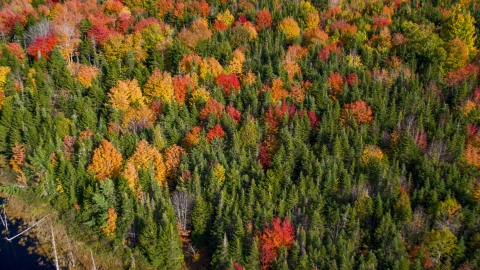 AX148_048.0000042 - Aerial stock photo of Colorful autumn forest in Cushing, Maine