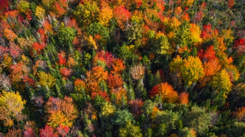 AX148_051.0000000 - Aerial stock photo of A colorful forest in autumn, Cushing, Maine
