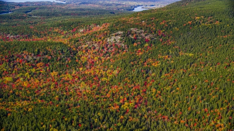 AX148_158.0000000 - Aerial stock photo of A colorful forest in autumn, Mount Desert Island, Tremont, Maine