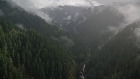 AX154_048.0000349F - Aerial stock photo of A misty canyon, evergreen forest, and Eagle Creek Trail, Cascade Range, Hood River County, Oregon
