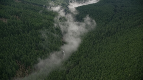 AX154_053.0000311F - Aerial stock photo of Bird's eye view of mist over a creek, and evergreen forest in the Cascade Range, Hood River County, Oregon