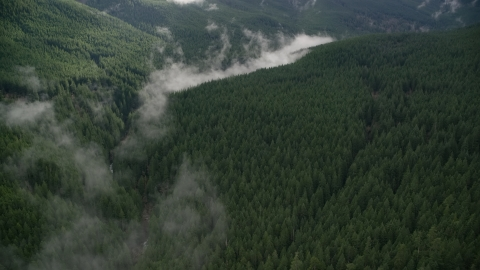 AX154_054.0000248F - Aerial stock photo of Mist over Eagle Creek Trail in canyon with evergreens in the Cascade Range, Hood River County, Oregon