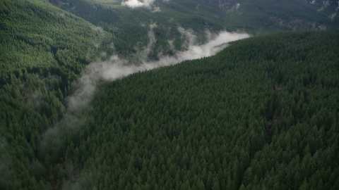 AX154_055.0000000F - Aerial stock photo of Evergreen forest and clouds of mist in the Cascade Range, Hood River County, Oregon