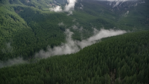 AX154_056.0000000F - Aerial stock photo of Mist hanging over evergreen trees at the bottom of a canyon in the Cascade Range, Hood River County, Oregon